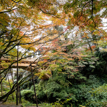 山中温泉こおろぎ橋の紅葉