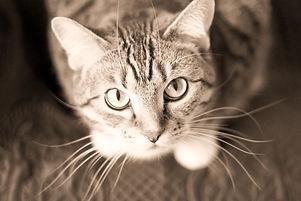Green Eyed Cat_edited_edited.jpg