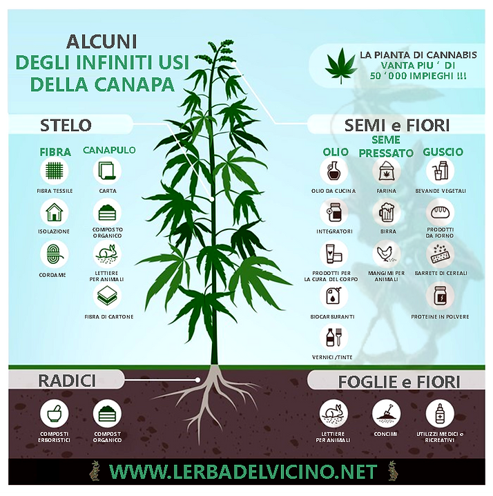 utilizzi cannabis cartello definitivo2 .