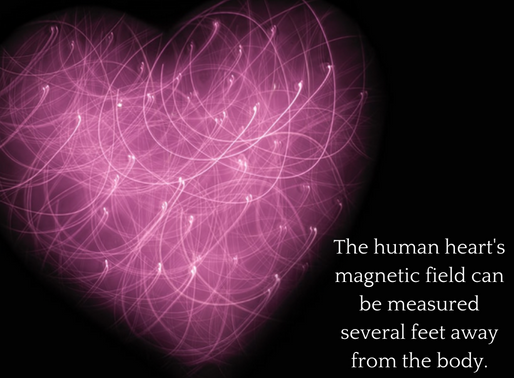 The Human Heart's Magnetic Field