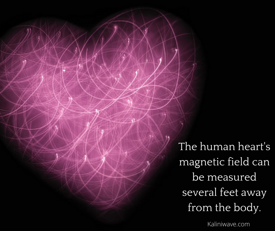 The human heart's magnetic field can be measured several feet away from the body.