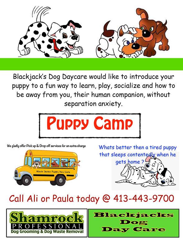 Puppy camp-2.jpg