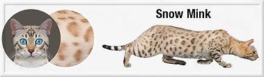 Snow Mink f.jpg
