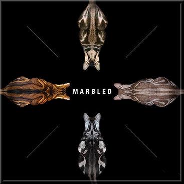 Marbled framed.jpg