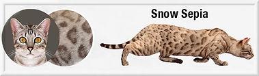 SnowSepia f.jpg