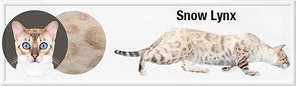 Snow Lynx f.jpg