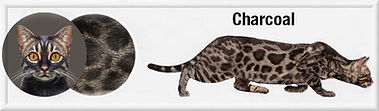 Charcoal f.jpg