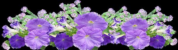 petunias.png