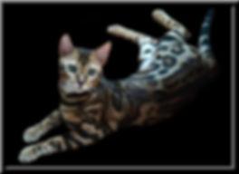 DICK 2.jpg