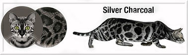 silver charcoal f.jpg