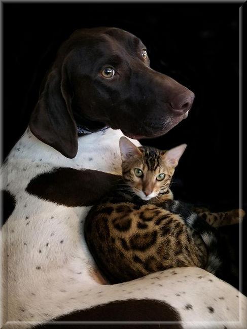 DOG CAT FRAMED.jpg