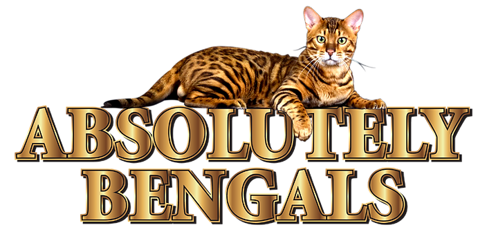 Absolutely Bengals Transparent small siz