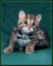 BABY ACE 2.jpg.jpg.jpg