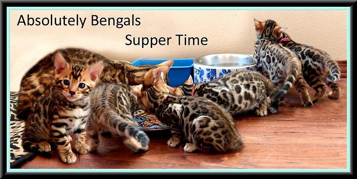 Kittens framed.jpg