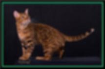 cat double frame 4.jpg.jpg.jpg