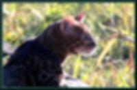 COOKIE WEB PROFILE.jpg