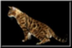 SOLARIS 3.jpg