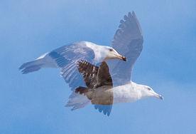 BIRD PHOTOGRAPHY 3