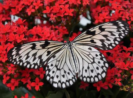 Die Seelenbotschaft der Schilddrüse, unserem Schmetterlingsorgan