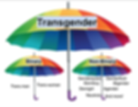 trans umbrella.png