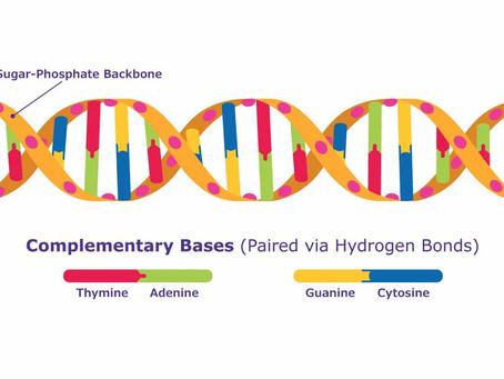 DNA, Kromozom ve Hücre: Çizimler ve Animasyonlar, Gerçekte Olanı Tam Olarak Yansıtmıyor!