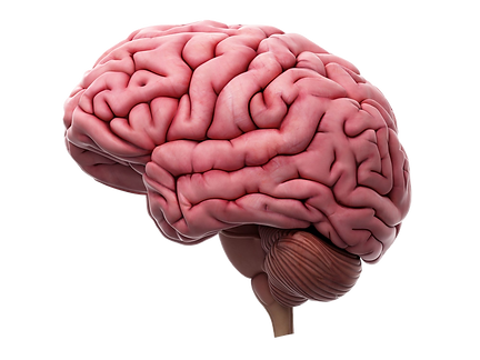 brain-stock.png