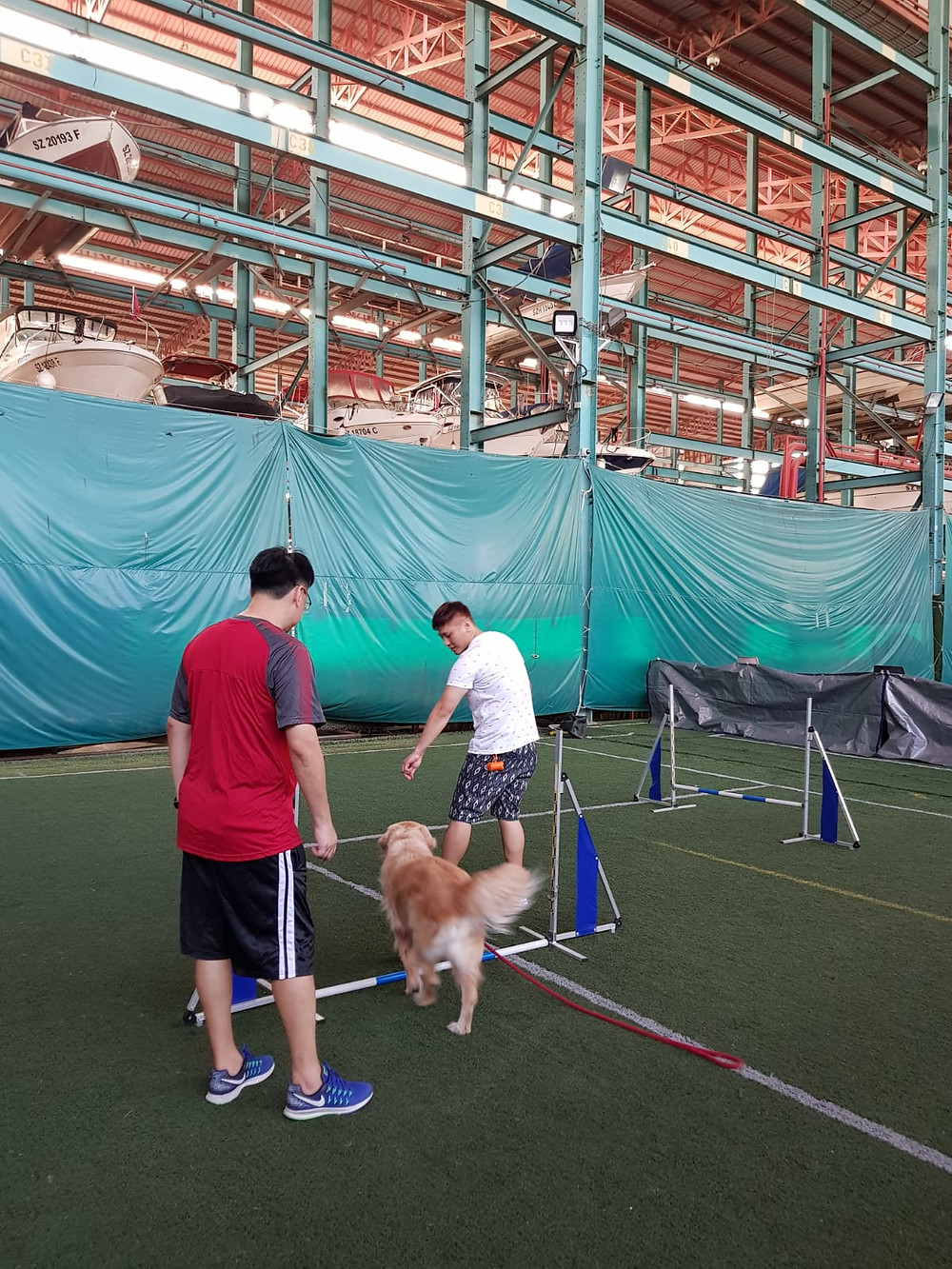 Dog Agility, Agility PUPS