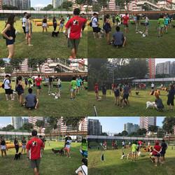 Dog Agility Seminar at SengKang CSC