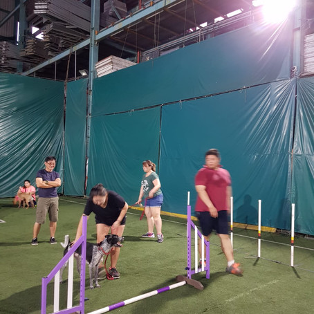 Drawing Line in Dog Agility!