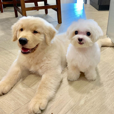 How to teach a hyper puppy to settle down?