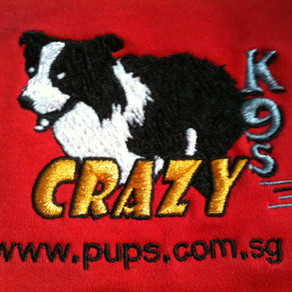 The New Era - PUPS CrazyK9 Flyball Team!