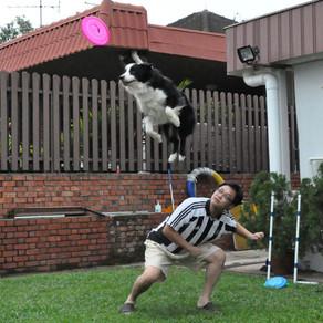 Dog Assistant Trainer - My Fabulous K9 Assistant!