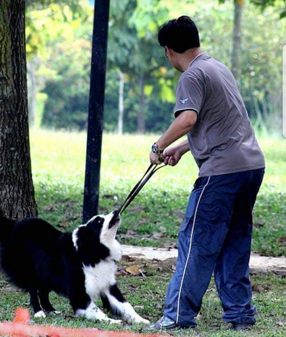 Play versus Engagement in Dog Training