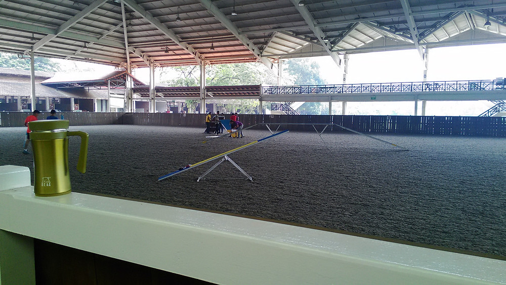 Dog Agility Training at Polo Club
