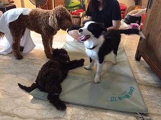 TGIF - Dog Training is not barking on st