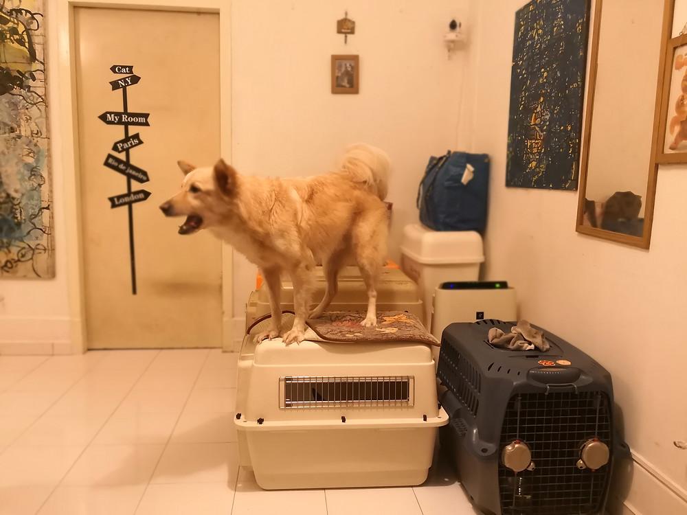 Dog training mongrel