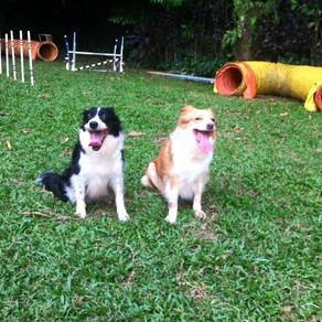 How to upkeep your Dog Senior?