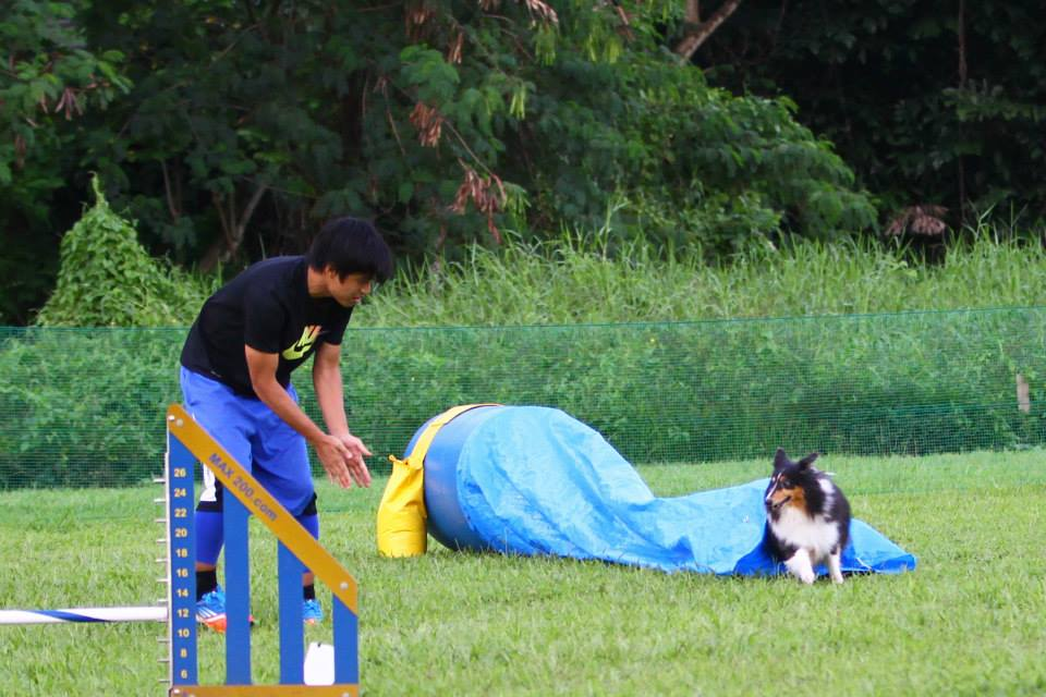 Blaze & Aloysius Winner at USDAA Agility Trials