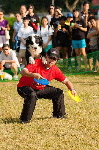 Dog Frisbee, Disc Dogging