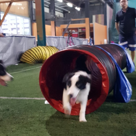 Agility Series - Find the Tunnel!