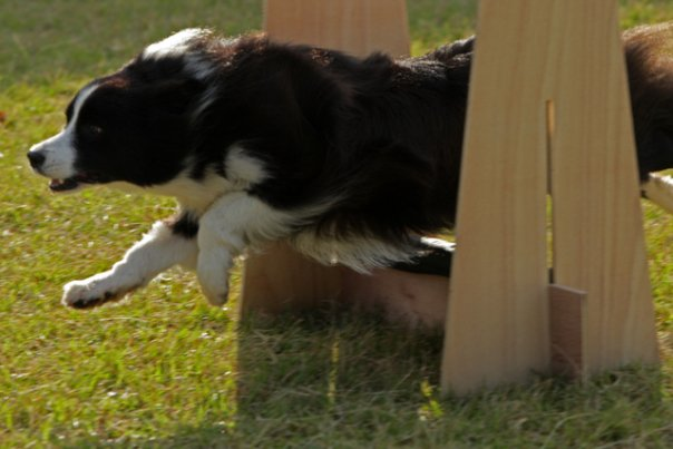 PUPS Flyball Team