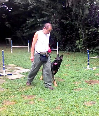 OT – The Pre-Novice Obedience Championship Obedience Trial