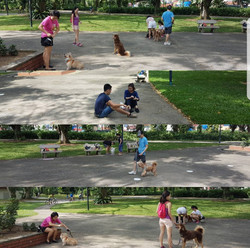 West Coast Park Obedience Class