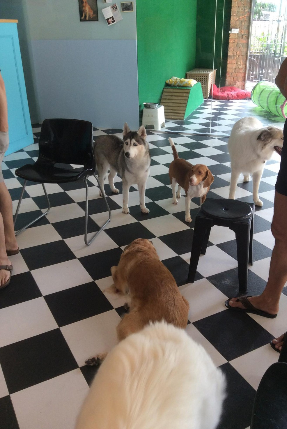 Puppy Training Class