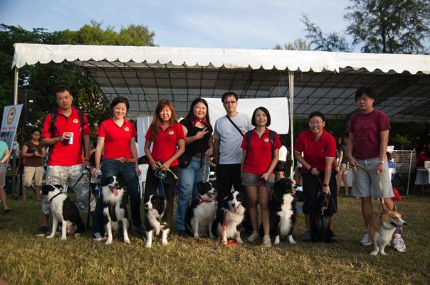 Extended CrazyK9 Flyball Team