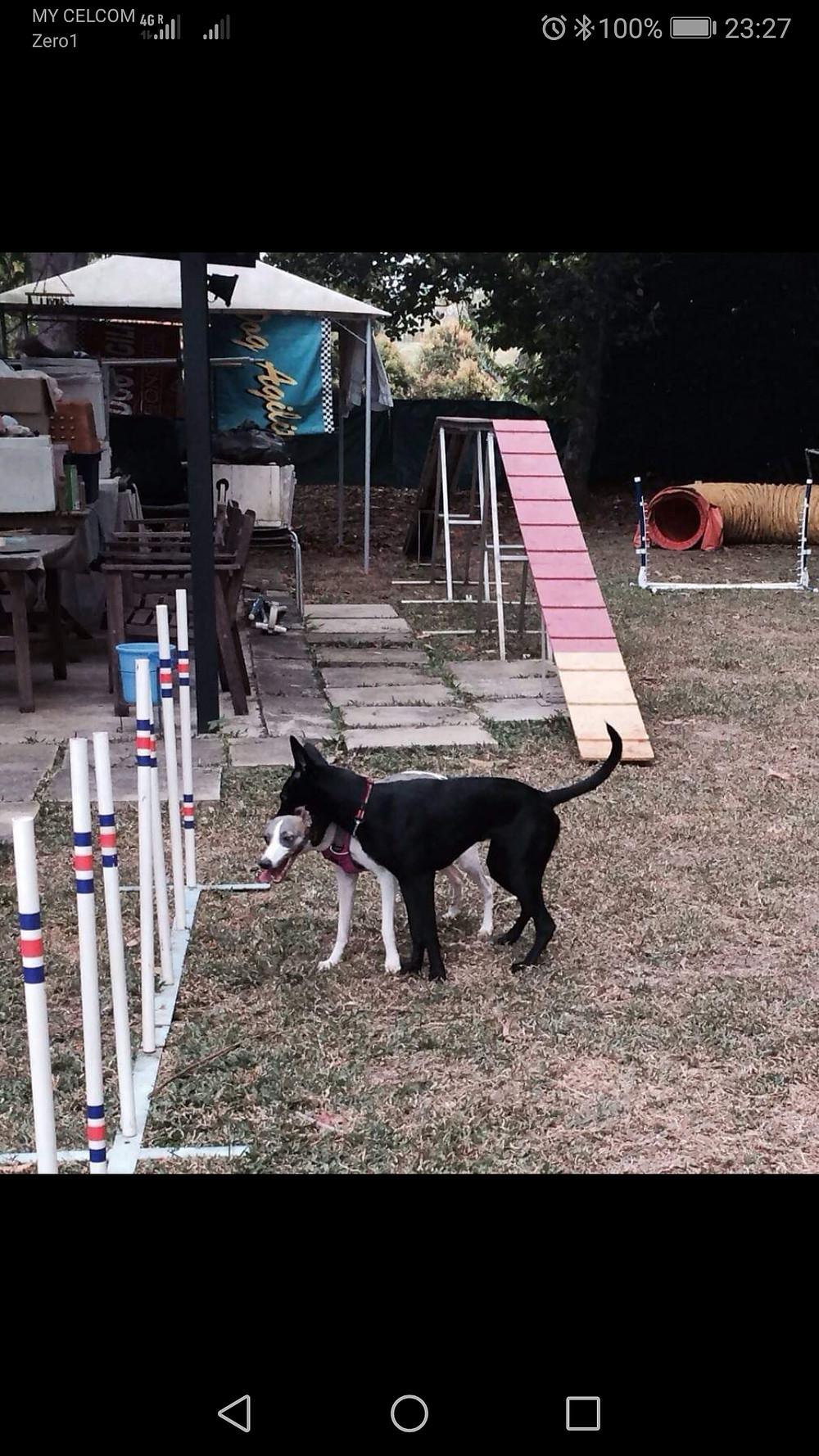 PUPS Dog Training