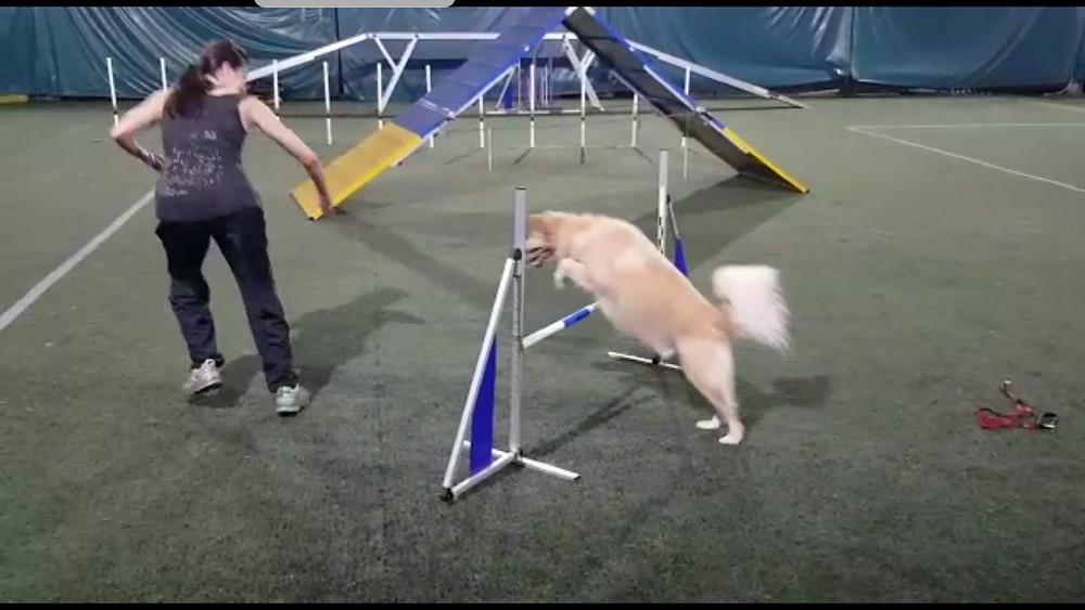 Dog Agility Basic