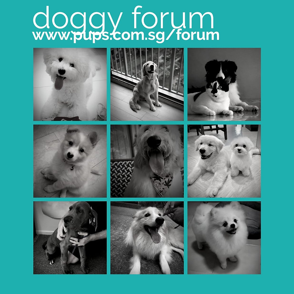 PUPS Doggy Forum for all dog lovers
