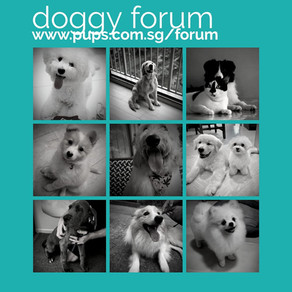 CREATED A DOGGY FORUM