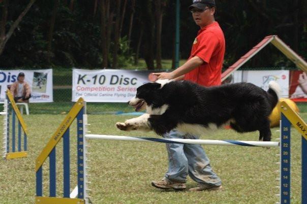 USDAA Dog Agility